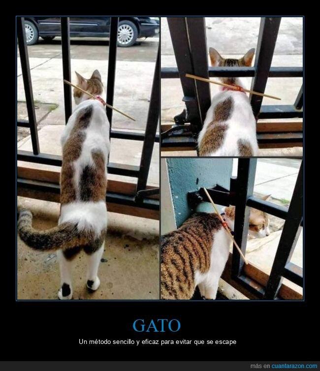 escaparse,gato,palo