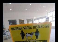 Enlace a Vaca como unidad de medida