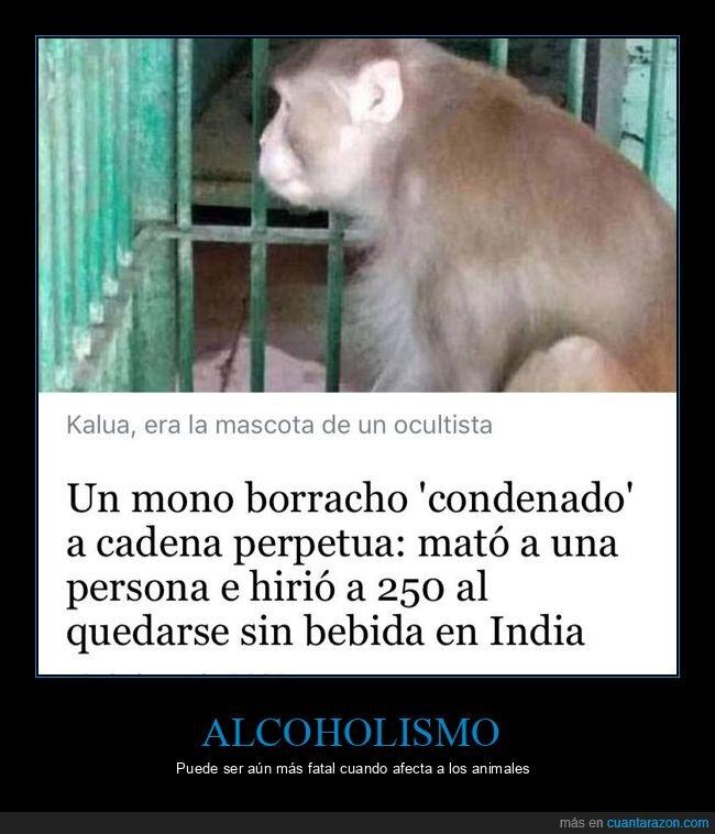 bebida,borracho,cadena perpetua,condenado,herir,matar,mono,wtf