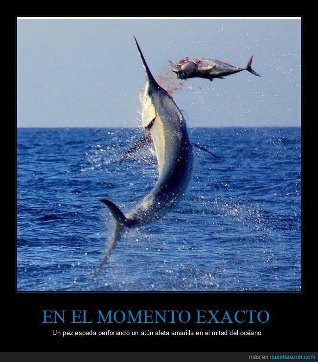 atún,mar,momento exacto,pez espada,wtf