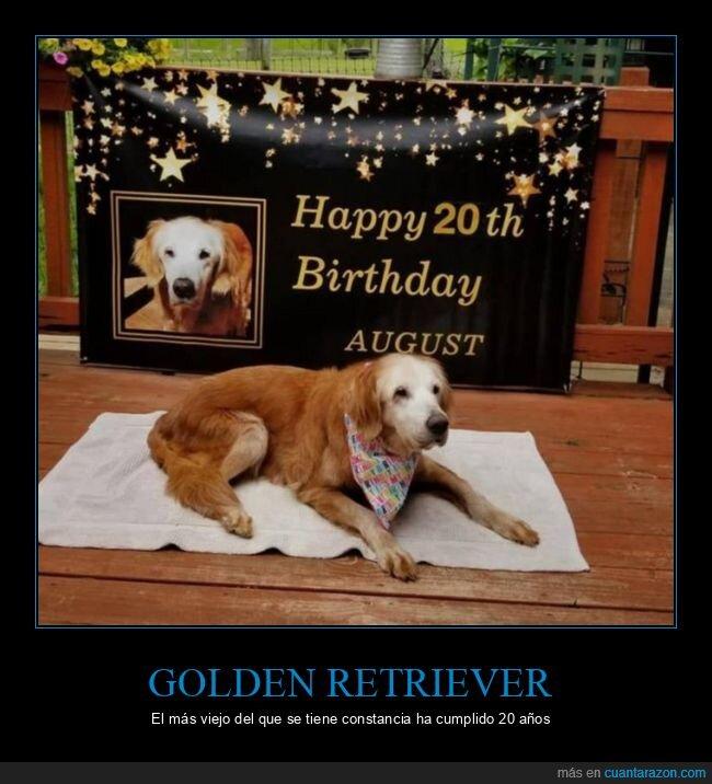 20 años,cumpleaños,golden retriever,perro,viejo
