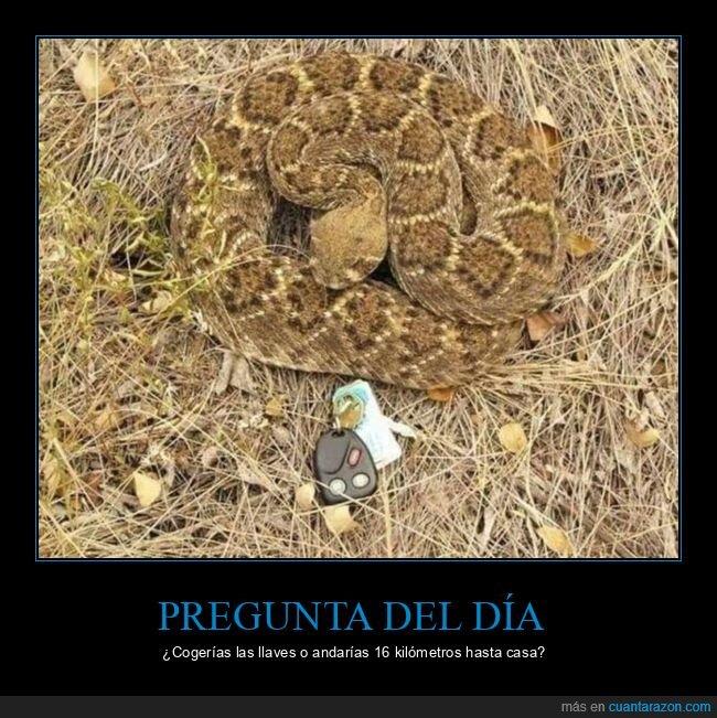 fails,llaves,serpiente