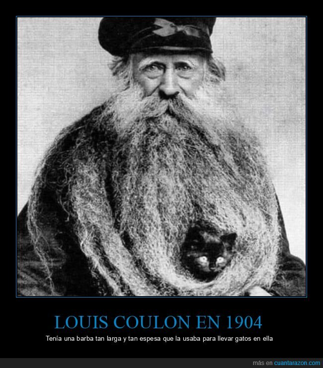 barba,gatos,louis couton,wtf