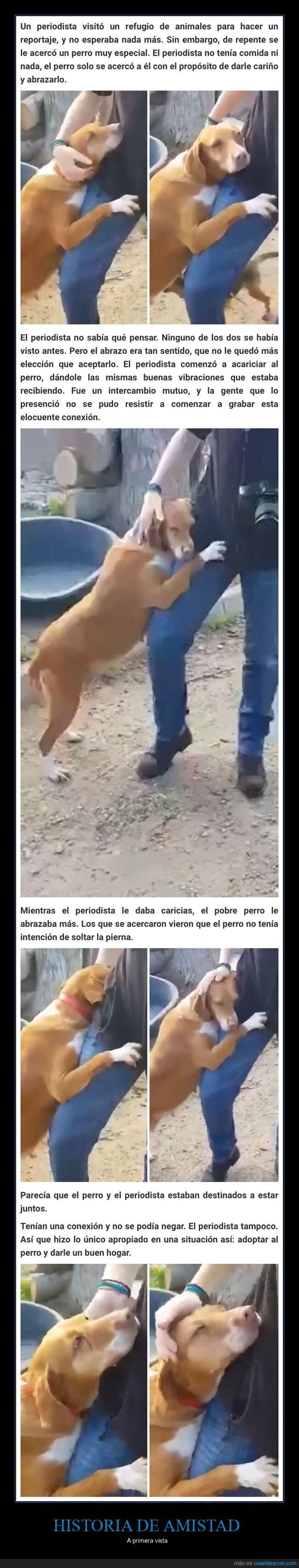 amistad,periodista,perro