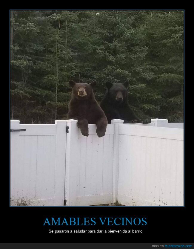 casa,osos,valla,wtf