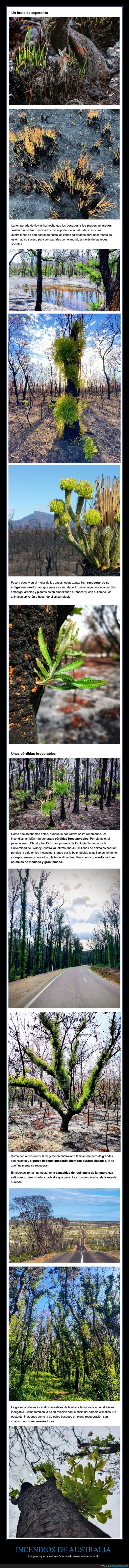 australia,incendios,naturaleza
