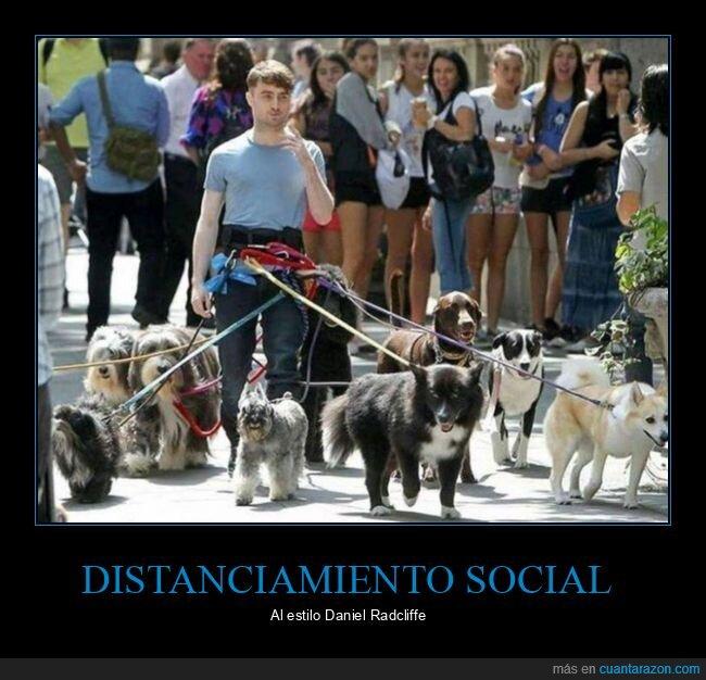 daniel radcliffe,distanciamiento social,perros
