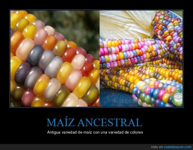 colores,maíz