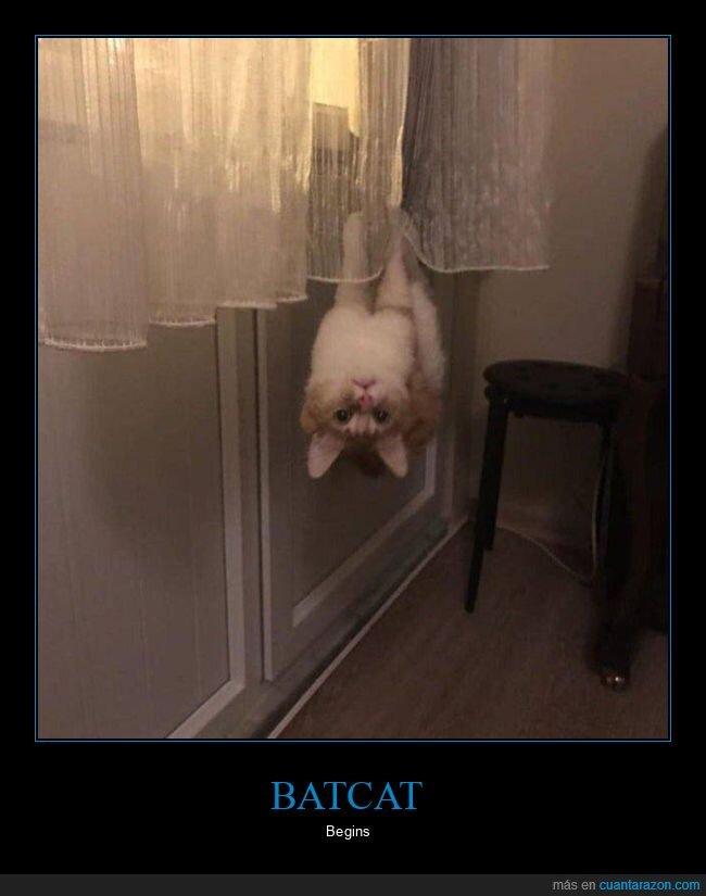 bocabajo,cortinas,gato