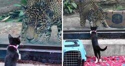 Enlace a Estos animales de un refugio fueron llevados de excursión al zoo para conocer a sus parientes exóticos