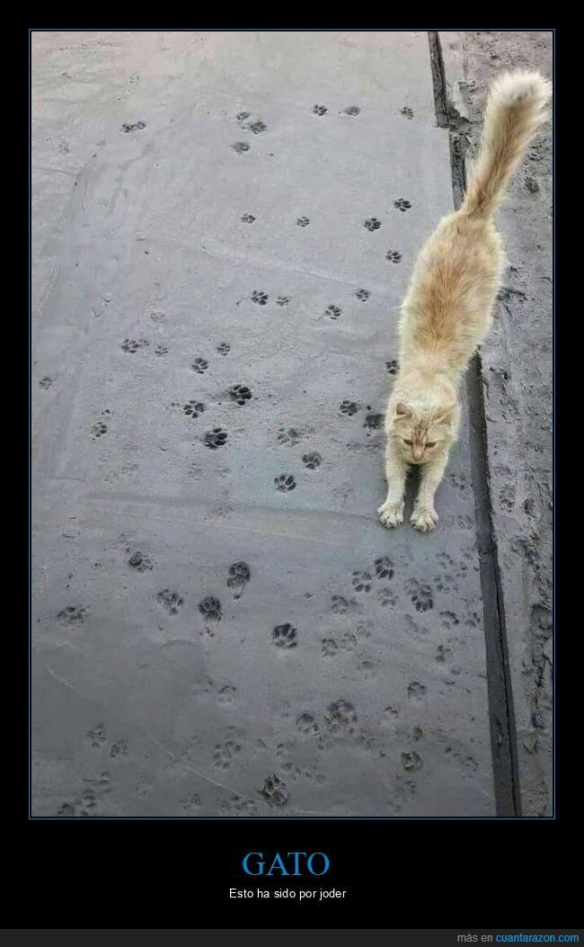 cemento,gato,huellas