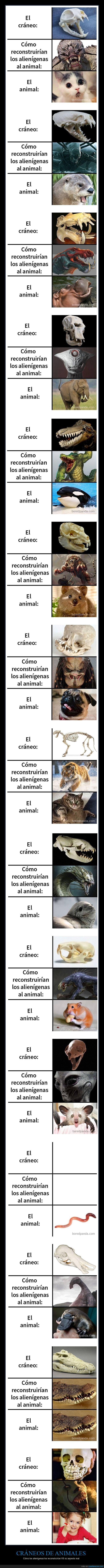 animales,cráneos,reconstruir