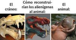Enlace a Cómo los alienígenas reconstruirían animales basándose en sus cráneos VS su aspecto real