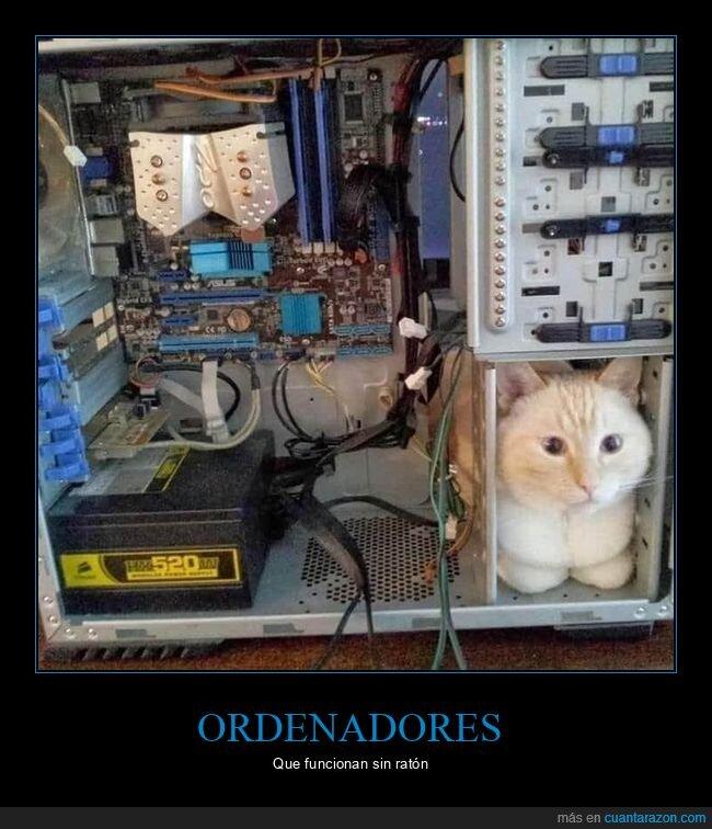 gato,ordenador,pc,ratón