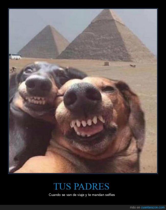 egipto,foto,padres,perros,pirámides,selfie