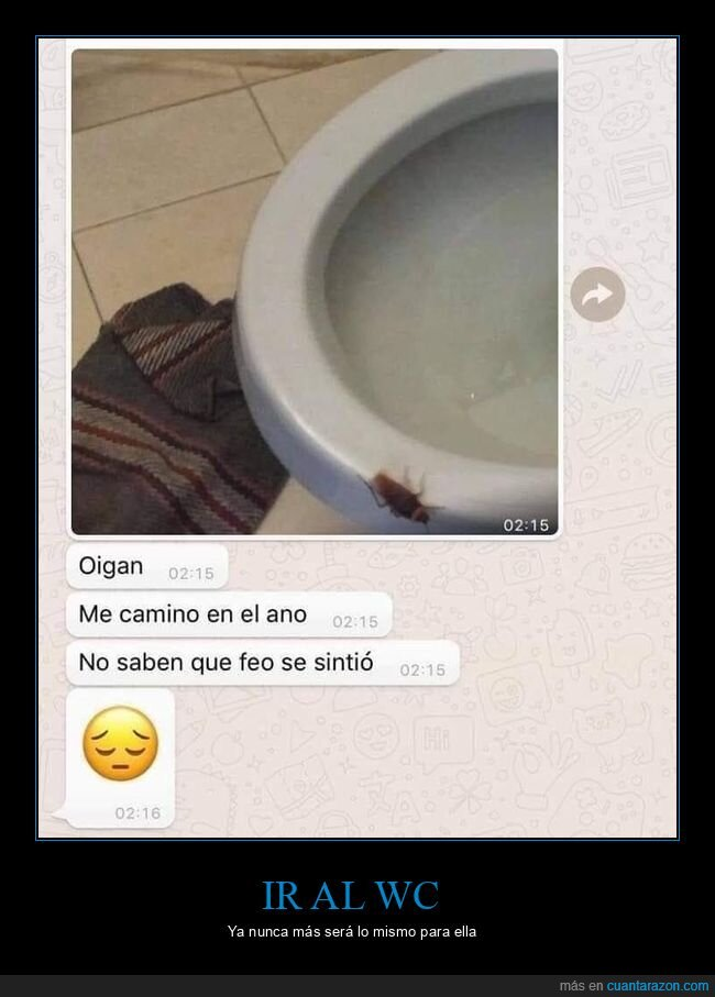 asco,escarabajo,toilet,water,wc