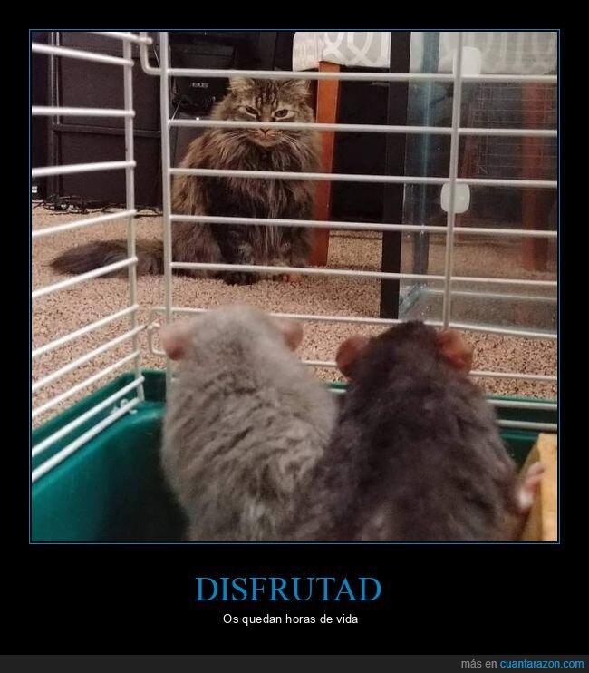 comida,gato,hamster,jaula