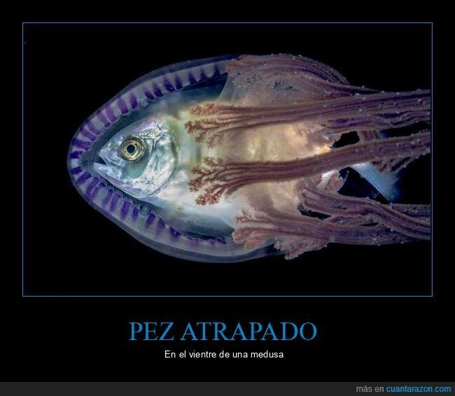 atrapado,medusa,pez