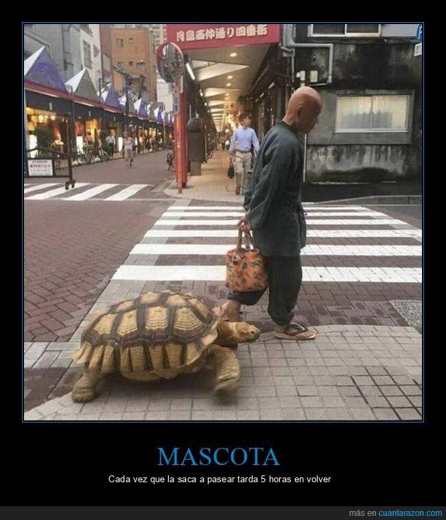 mascota,tortuga,wtf