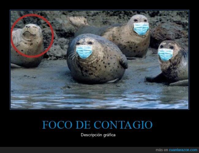 contagio,focas,foco,mascarillas