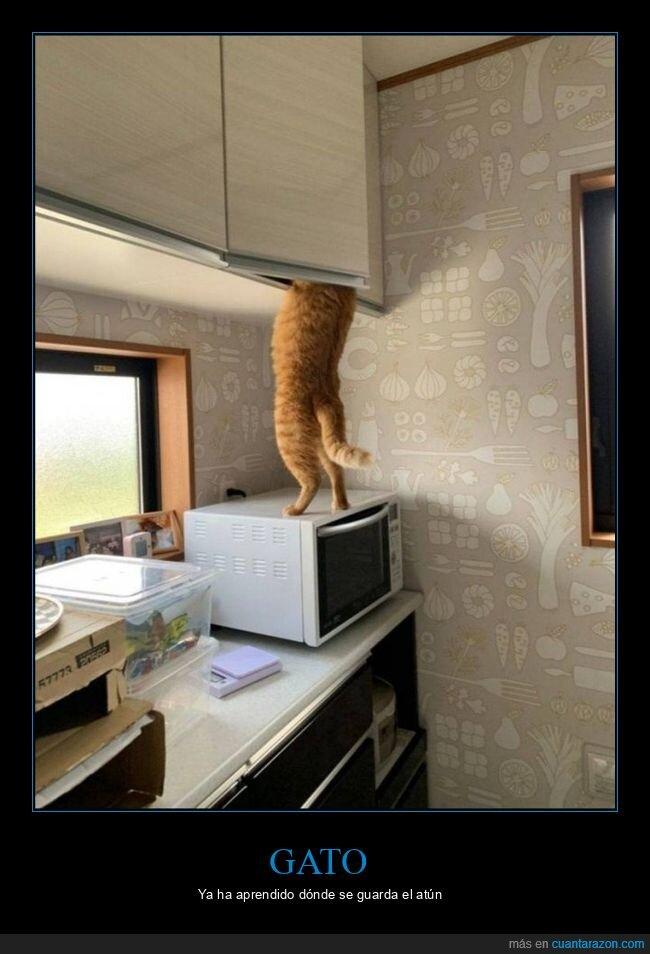 armario,gato,wtf