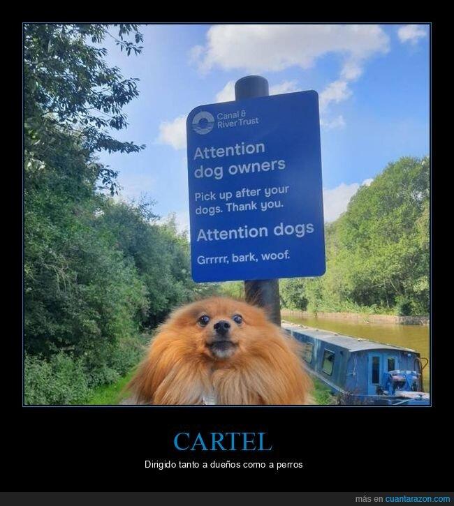 cartel,dueños,perros