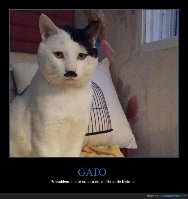 gato,hitler,parecidos