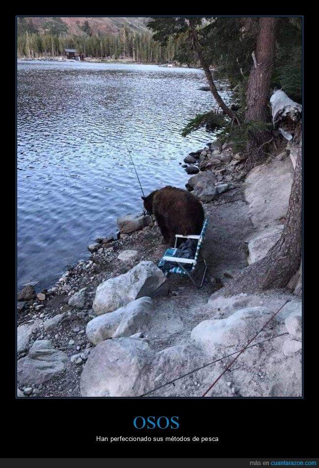 caña,oso,pesca