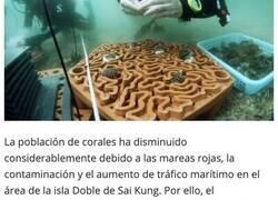 Enlace a Baldosas impresas en 3D para fomentar el crecimiento de los arrecifes de coral
