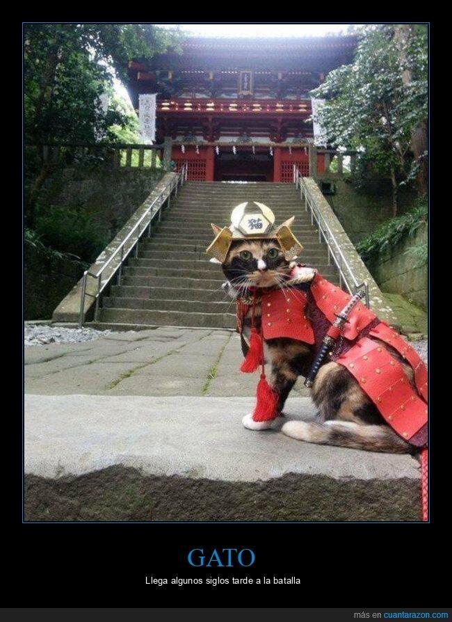disfraz,gato,samurai