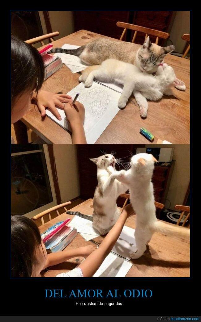 amor,gatos,odio,wtf
