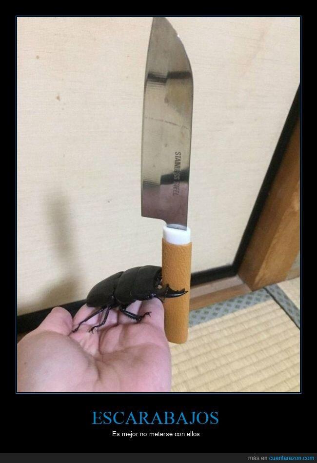 cuchillo,escarabajo,wtf