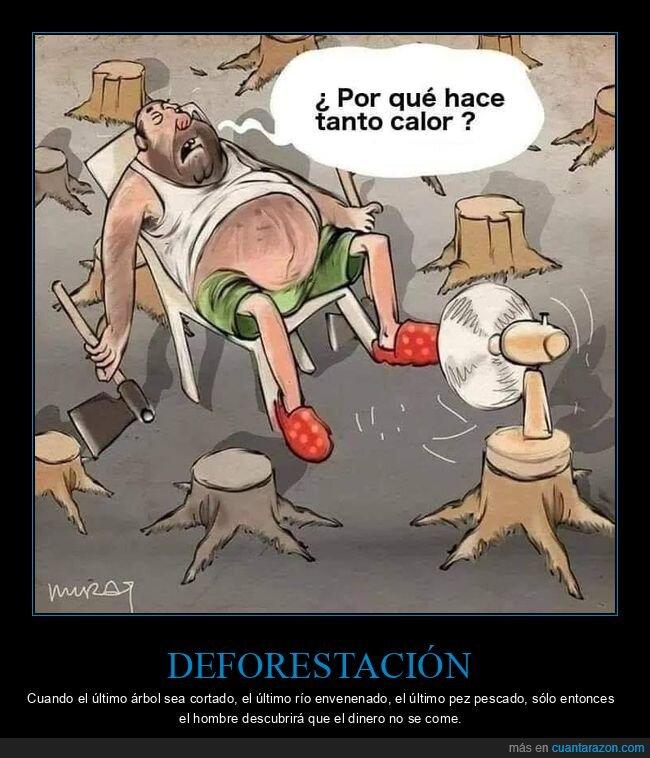 árboles,calor,deforestación