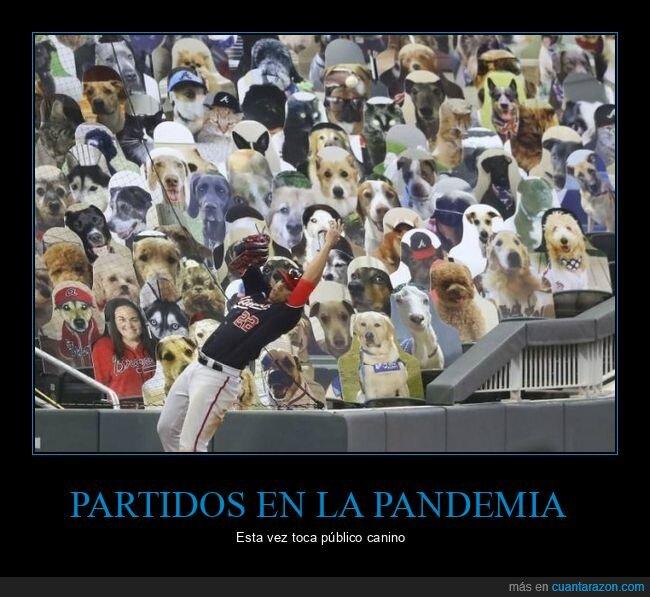 baseball,perros,público