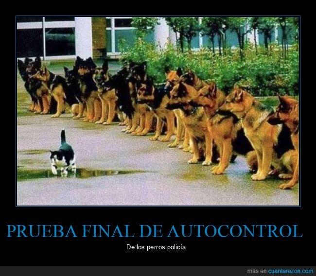 autocontrol,perros,perros policía,prueba