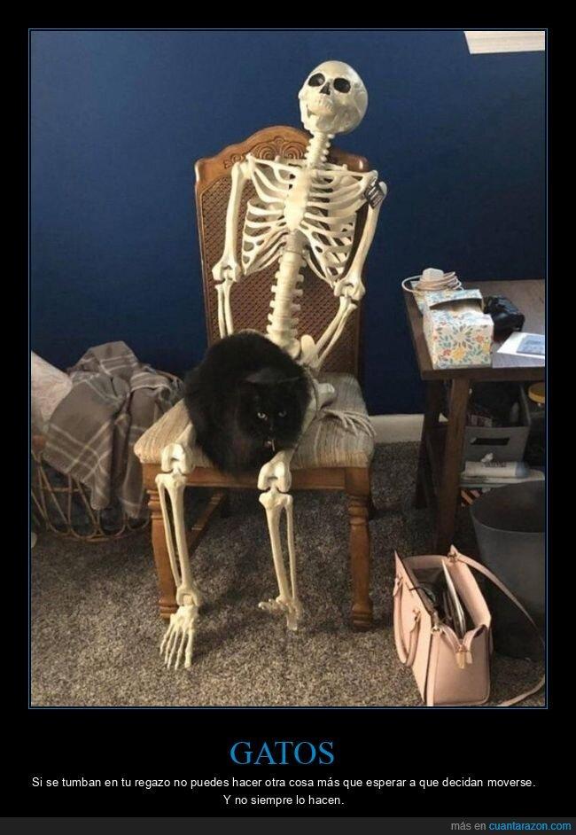 esqueleto,gato,regazo