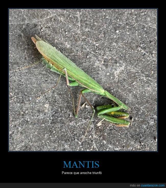 mantis,sin cabeza,triunfar