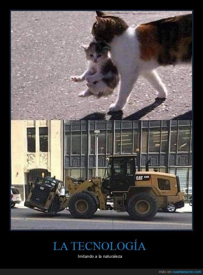 cat,gatos,parecidos