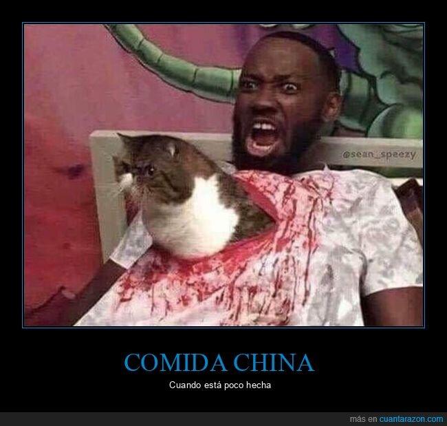 comida china,gatos,poco hecha