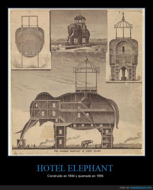 curiosidades,elefante,hotel