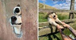 Enlace a 'Dogspotting' donde la gente comparte los mejores y más inesperados encuentros con perros