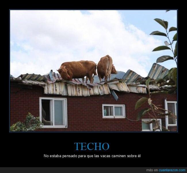 techo,vacas,wtf