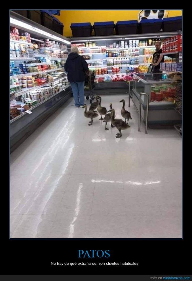 patos,supermercado,wtf