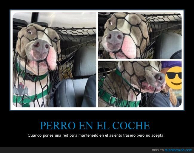 coches,perros,red
