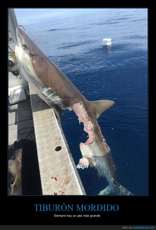 mordisco,tiburón,wtf