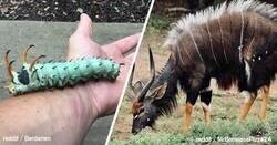 Enlace a Animales reales que, probablemente, no habías visto en tu vida