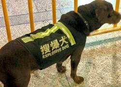 Enlace a Este perro es la bomba