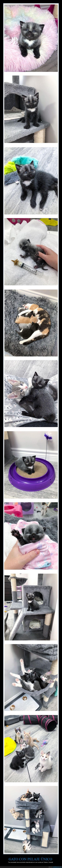 curiosidades,gato,pelaje
