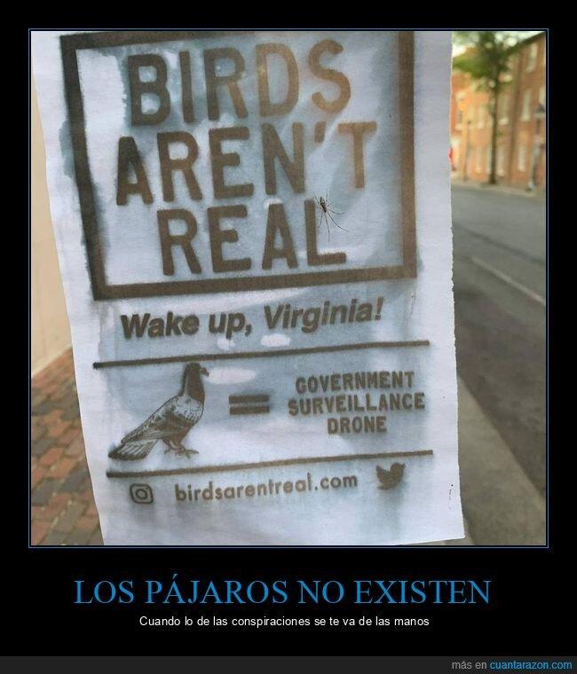 conspiranoicos,drones,existir,pájaros