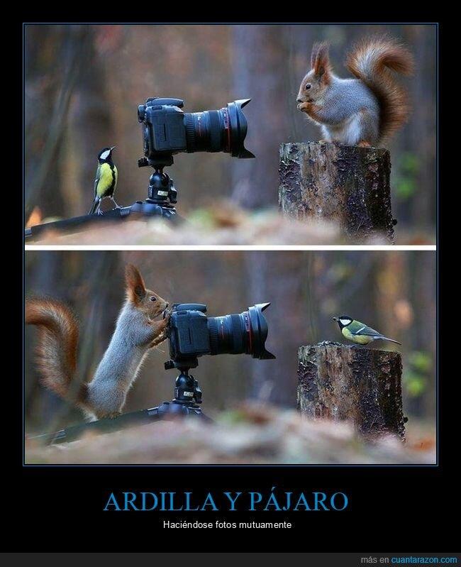 ardilla,cámara,fotos,pájaro
